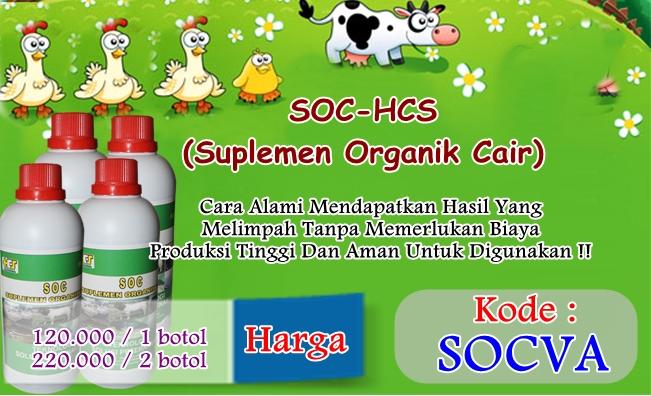Obat Fermentasi Pakan Ayam