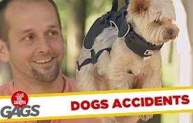 No Dogs Were Harmed in the Making of These Pranks