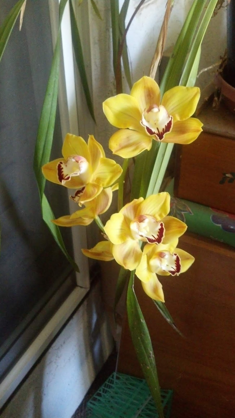 Outdoor Orchids Star In Sacramento Show