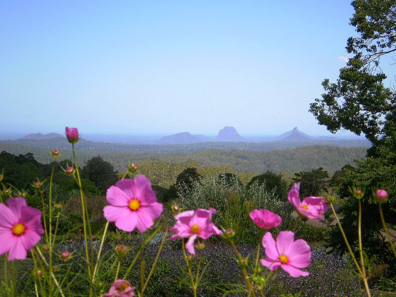 View of Glass House mountains with flowers in  the foreground