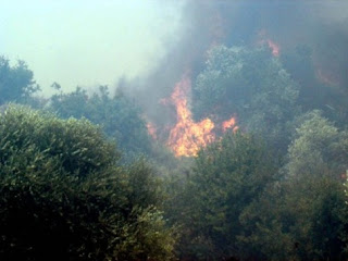 Φωτιά σε εξέλιξη στην Αμαλιάδα
