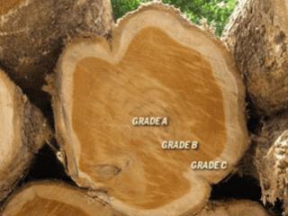 Grade kualitas kayu jati