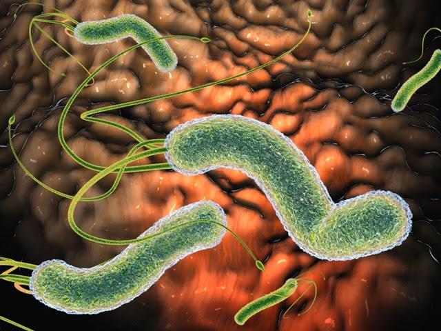 Бактерия хеликобактер пилори и высыпания на коже: есть ли взаимосвязь