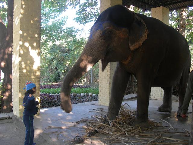 elephant with baby girl