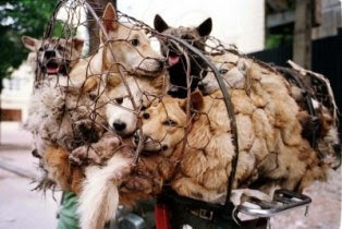 Dog meat sold as other meat in katharagama