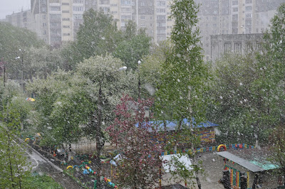 Снег во время цветения