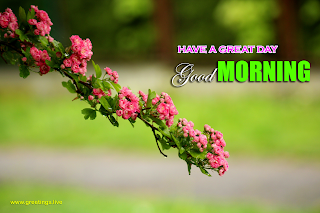 """good morning"" Have a great day beautiful flowers unique greetings design"