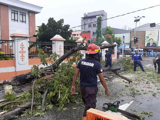Masyarakat Dukung DPKP dan DLHP Kota Ambon Atasi Pohon Tumbang