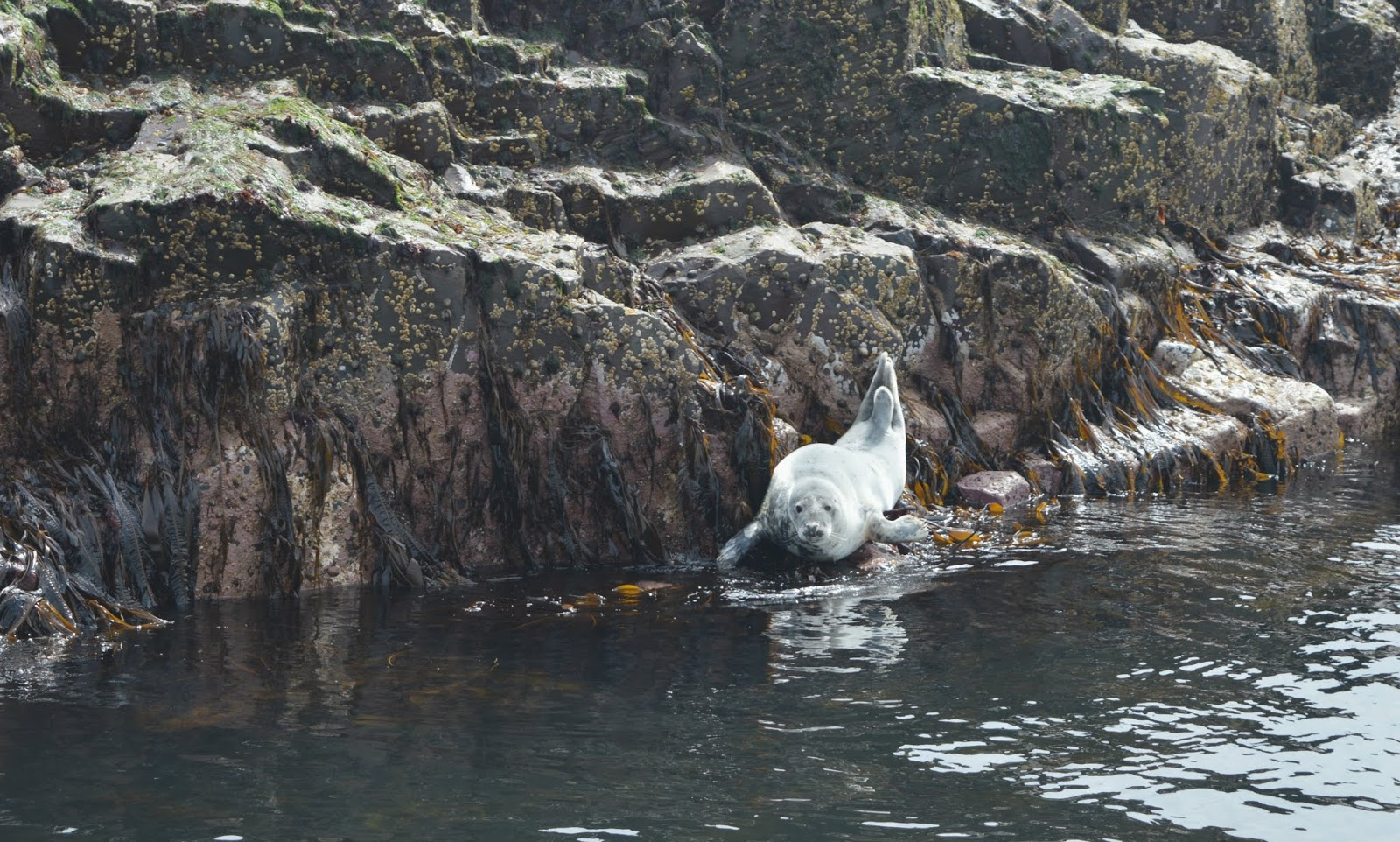 Farne Islands Serenity Boat Tours Seals