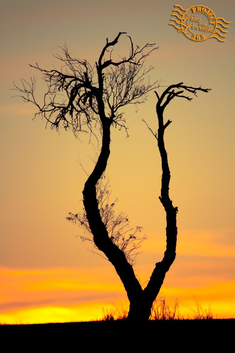 365 photo challenge, Lisa On Location photography, New Braunfels, Texas. Mesquite. Sunset.