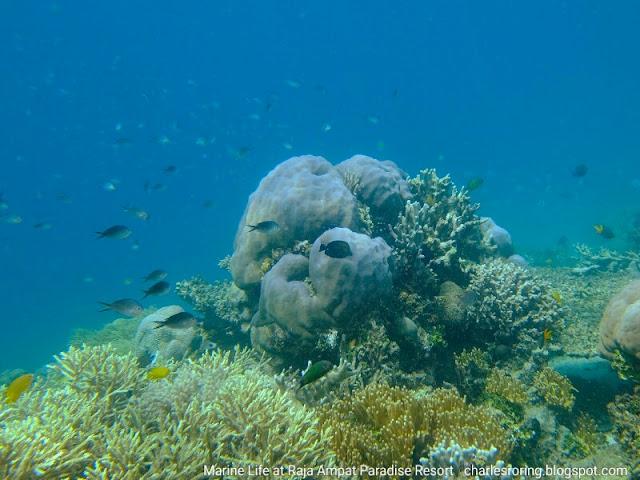 Snorkeling holiday in Raja Ampat