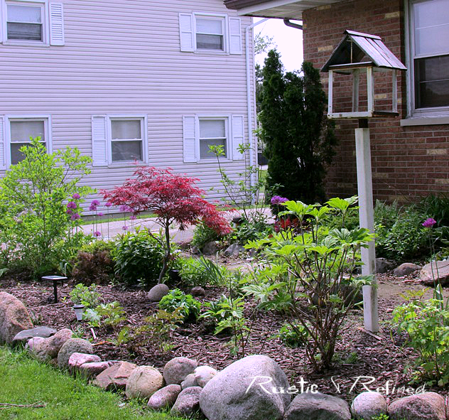 Gardening in the Midwest using Japanese Maples, Oakleaf Hydrangeas and bulbs