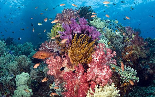 هل النباتات البحرية خضراء اللون كالنباتات الموجودة على سطح الأرض