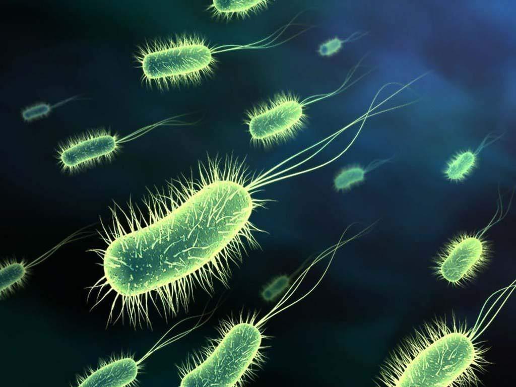 Resultado de imagen para procariotas