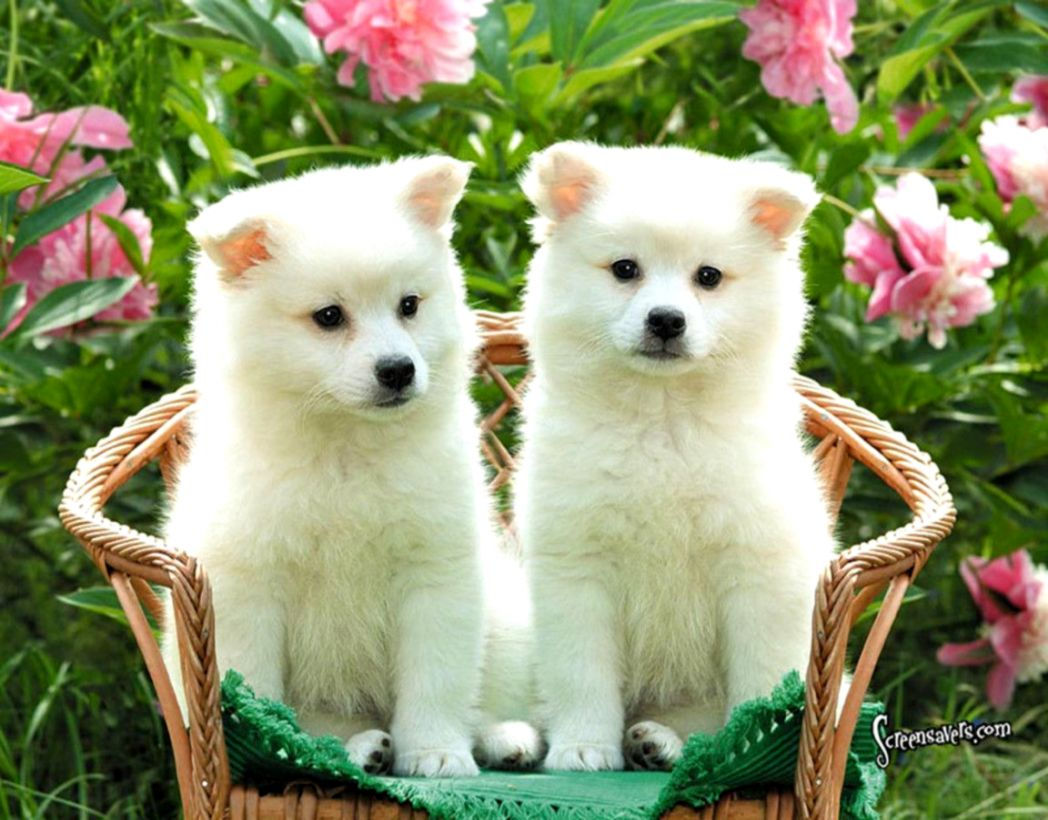 New Dogs Wallpapers Download High Quality HD