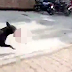 Omg! Dog Caught Running From Hospital With Newborn Baby In Its Mouth To Feed Puppies'
