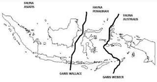 Garis Wallace dan garis Weber