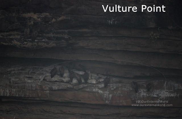 Vulture Point, Panna Tiger Reserve (taken in extreme fog)