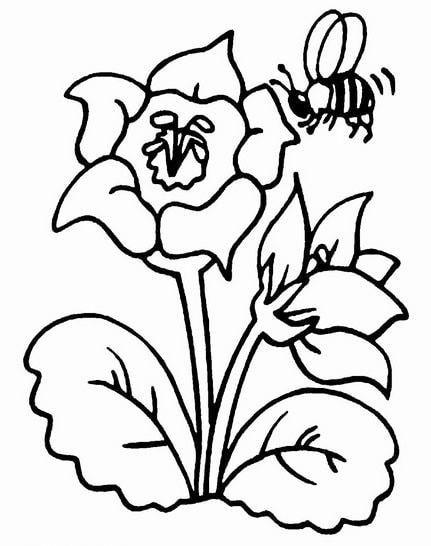 Mewarnai Gambar Mewarnai Gambar Bunga Mawar Untuk Anak