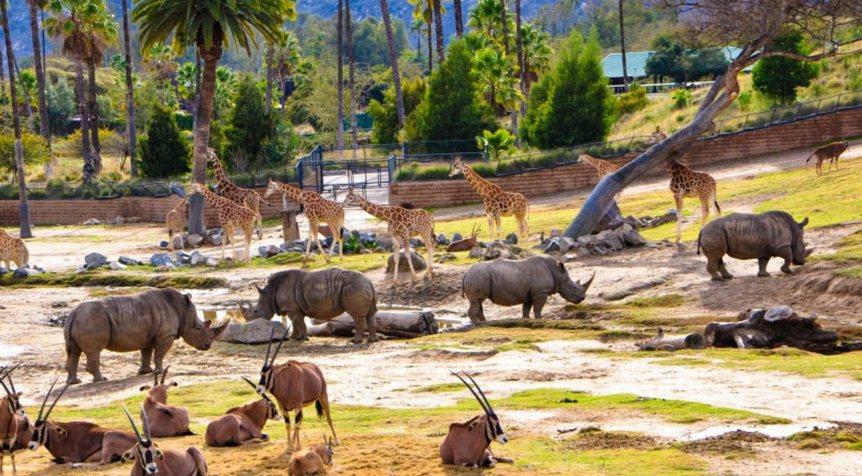 Geriausius pasaulio zoologijos sodus