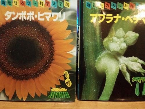 講談社 カラー科学大図鑑「タンポポ・ヒマワリ」「アブラナ・ヘチマ」 (1980)