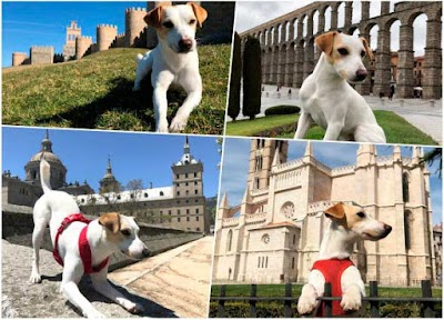 Viaja con tu mascota, viaja con Pipper el perro influencer