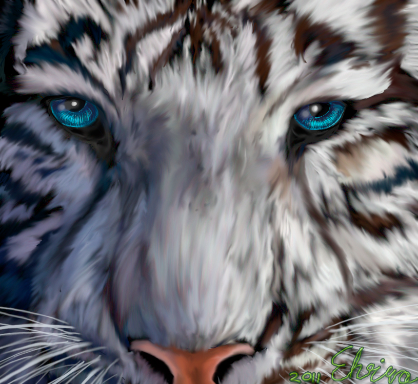 white+tigers+with+blue+eyes+(5)