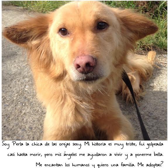 adoptar perros callejeros caracas abandonados