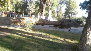 foto de diario huarpe de la caída de palmera de 20 metros en capital sanjuanina