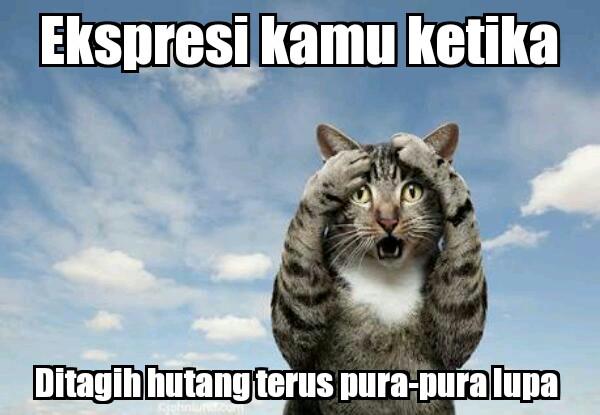 Kumpulan meme ekspresi kucing lucu
