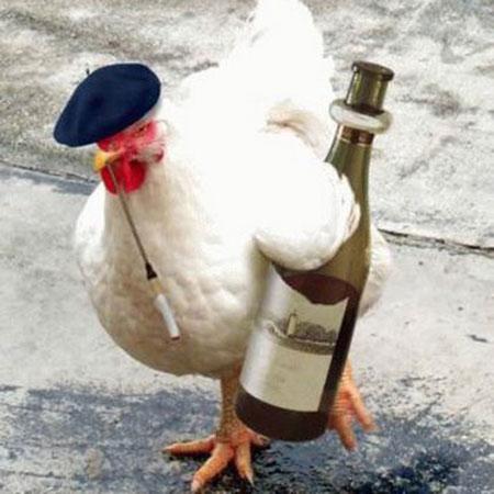 Hình con gà vui