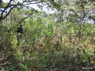 Vegetación Cerro Totoltepec