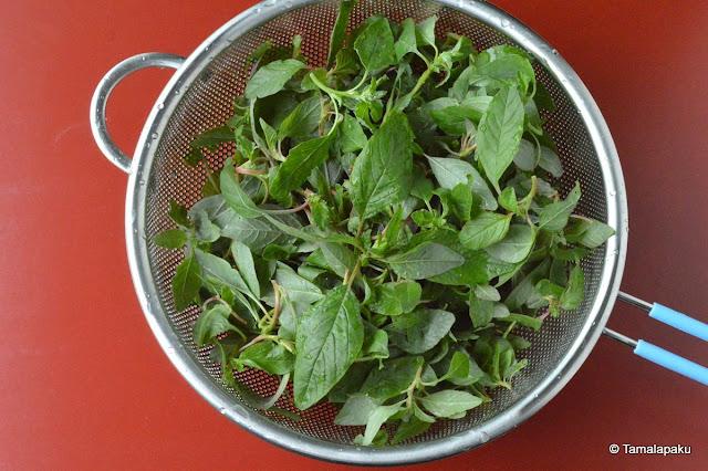 Fresh Thotakoora, Amaranth leaves