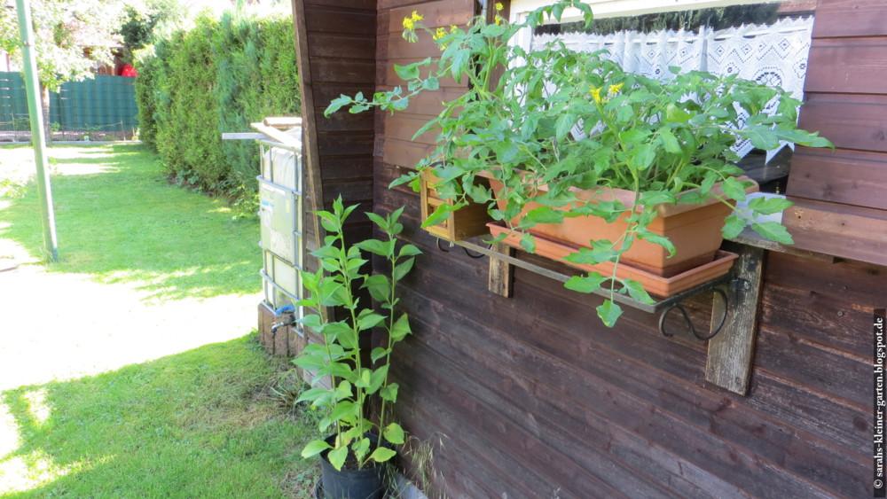 Meine Kleine Welt Garten Ende Juni 16