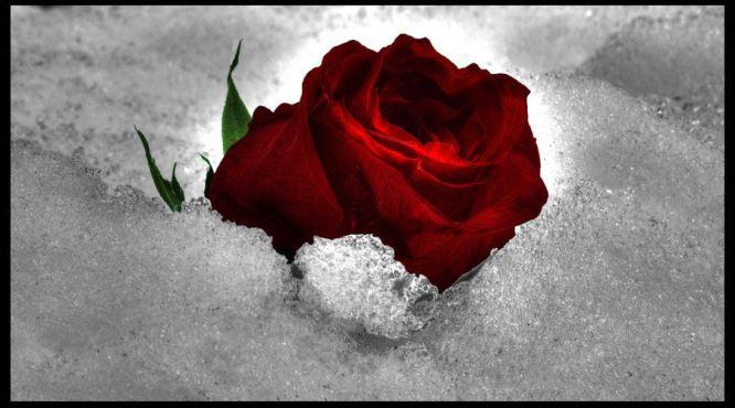 Kar, Gül, Sevgi