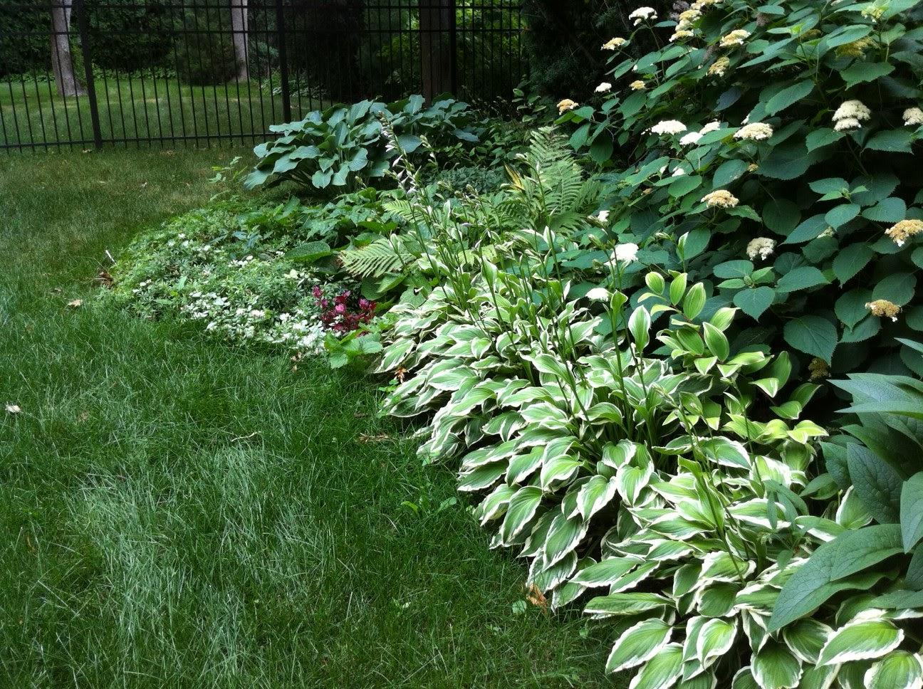 Teresa S Garden Song I Love Hostas Perfect Shade Garden Perennial