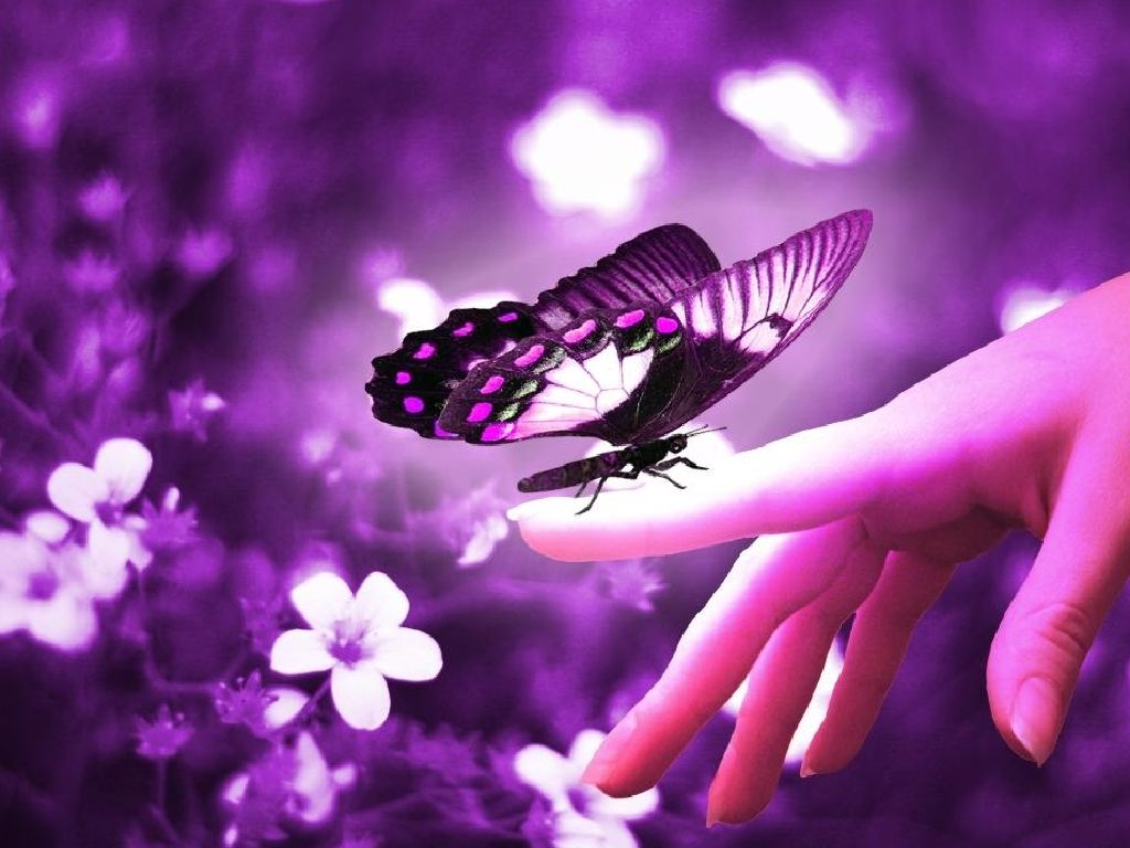 butterfly background - photo #7