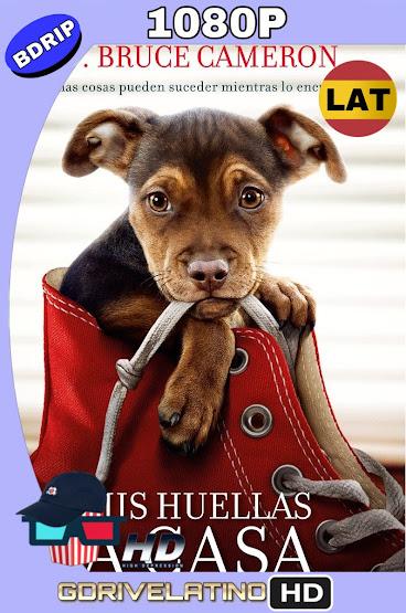 Mis Huellas a Casa (2019) BDRip 1080p Latino-Ingles MKV