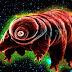 Esta criatura encontrada na terra possui 17,5% de DNA extraterrestre e é capaz de sobreviver no espaço