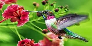 Ciri Khusus Makhluk Hidup dan Lingkungan Hidupnya