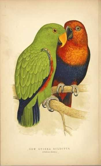 BOOKTRYST: The Writing Parrot On Rare Parrot Books