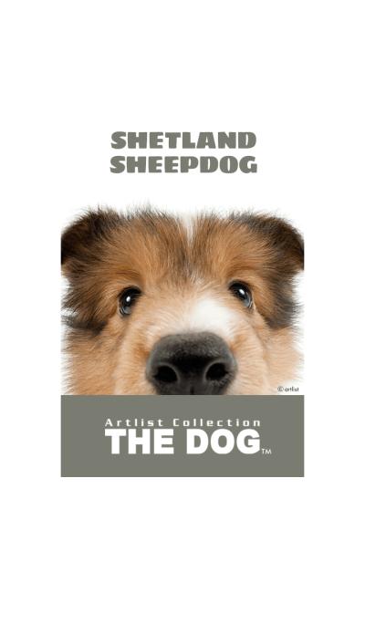 THE DOG Shetland Sheepdog 2