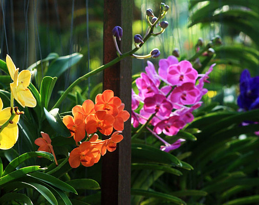 Thai Orchid Nursery In Et
