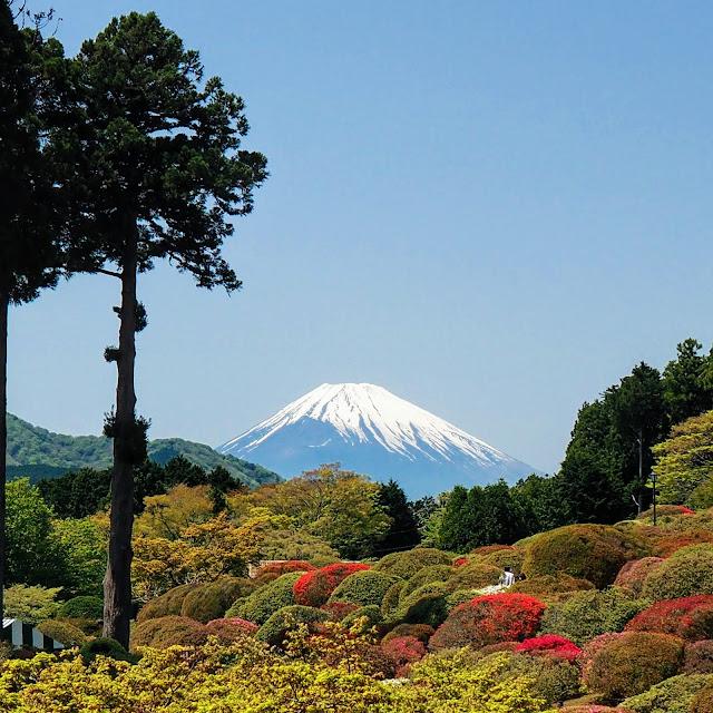 箱根 山のホテル ツツジ 富士山
