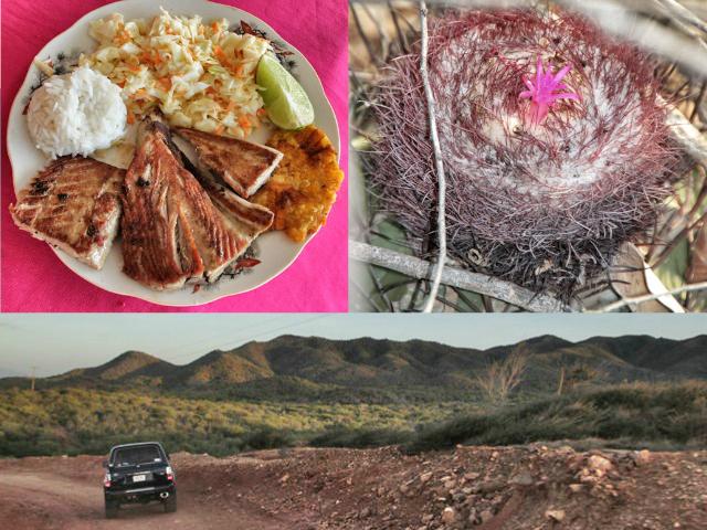 Almuerzo, cactus y atardecer en Isla Margarita