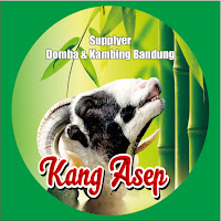 Supplyer Kambing