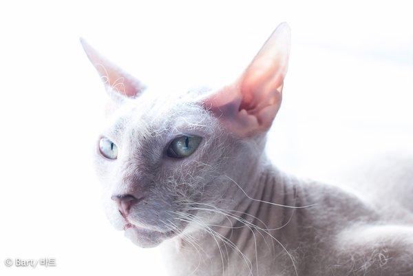 spynx cat bar