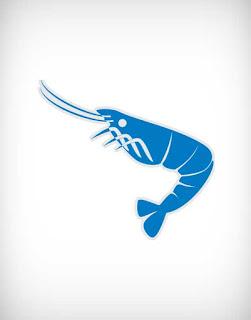 shrimp vector, lobster vector, fauna vector, lobe vector, fish vector, prawn vector, frozen food vector, চিংড়ি, বাগদা, গলদা,