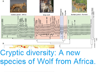 https://sciencythoughts.blogspot.com/2015/08/cryptic-diversity-new-species-of-wolf.html