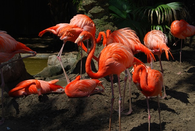 Activities and Attractions in New Orleans, Louisiana | Audubon Zoo